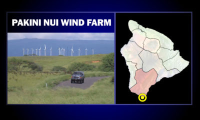 South Point Wind Farm Requests License For Potential Bat, Petrel, Nene Deaths