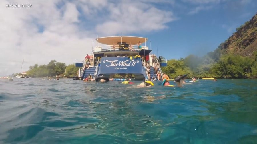 VIDEO: Kona Reefs Featured In DLNR Saving Coral Special