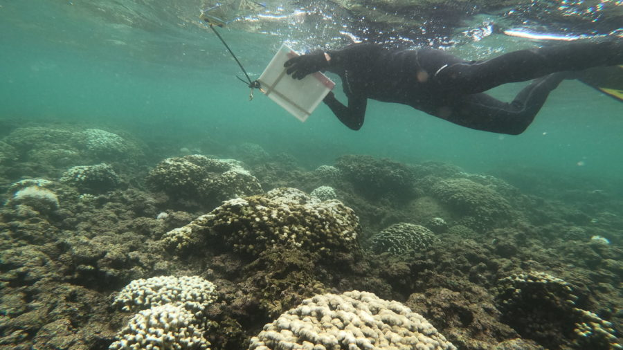 Coral Bleaching Widespread, But Not As Severe As Predicted