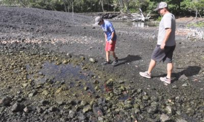 VIDEO: New Life Found In Pohoiki Ponds After Lava Flow