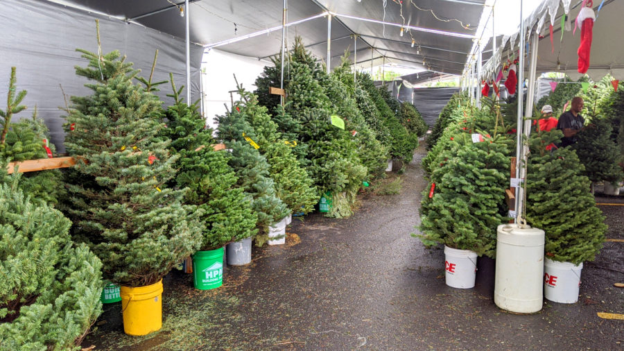 Locally Grown Christmas Trees To Be Discussed, Dec. 4