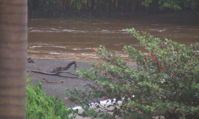 Brown Water Advisory Issued For Entire Island Of Hawaii