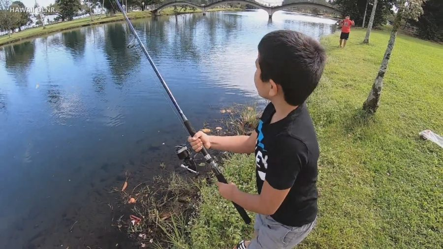 VIDEO: Hilo Fishing Contest Targets Invasive Tilapia