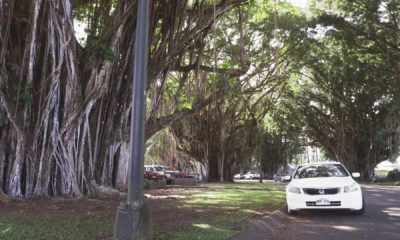 VIDEO: Banyan Drive Redevelopment Update