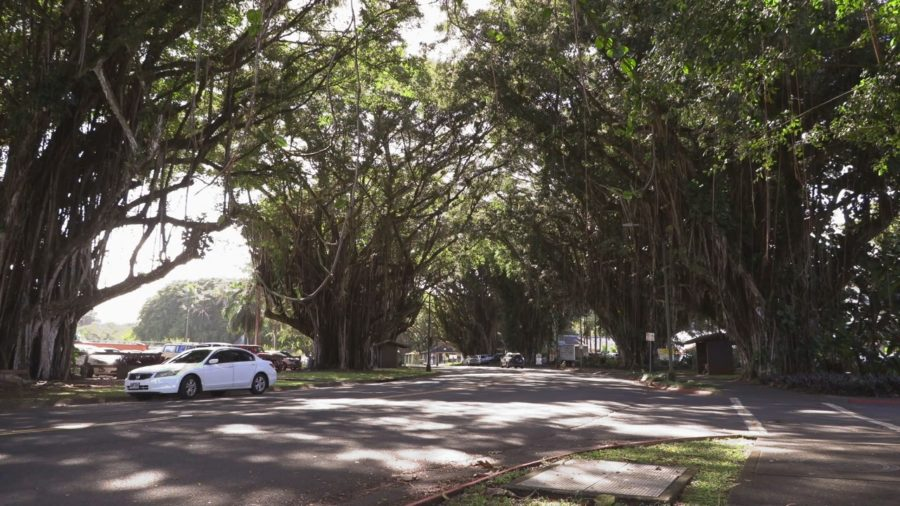 Three Visitors Arrested After Breaking Quarantine On Banyan Drive