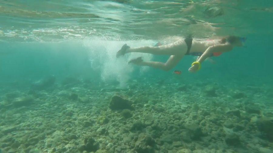 Kahaluʻu Bay Coral Gets Rest, Spawning Expected This Week