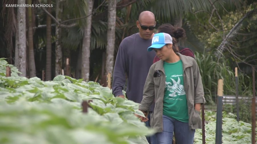 VIDEO: Funds Awarded To Innovative Hawaii Island Ag Projects