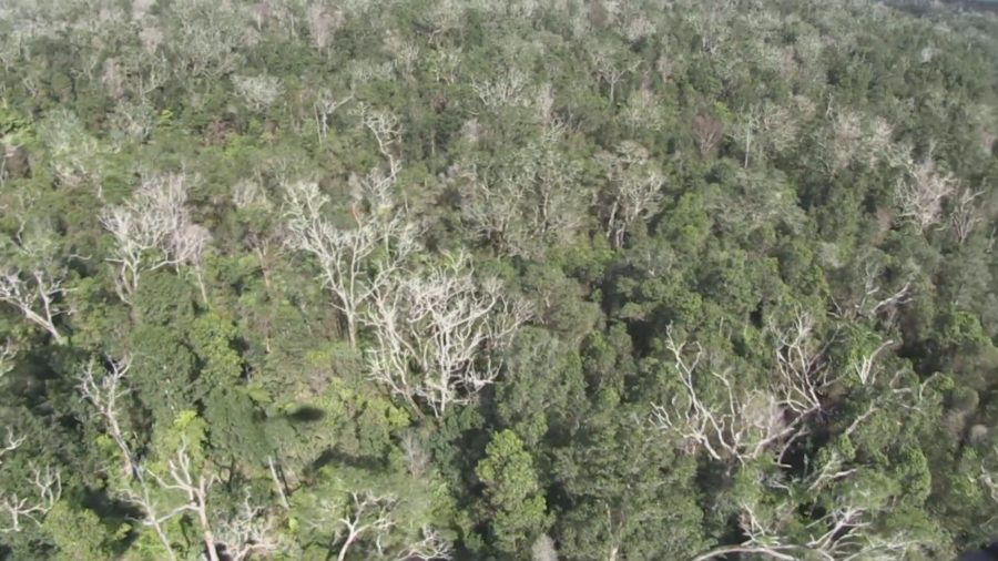 Forest Restoration After Rapid ʻŌhiʻa Death May Be Possible, Study Shows