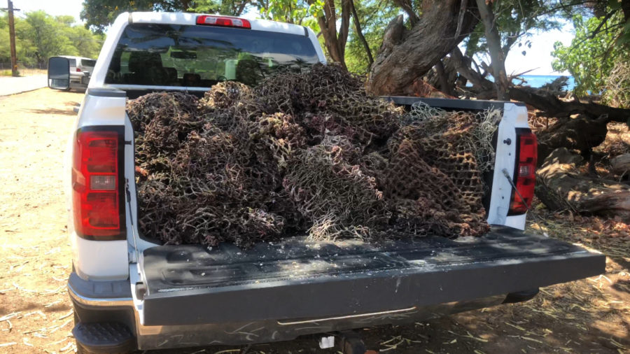 1200 Pounds Of Marine Debris Hauled Away In West Hawaiʻi Cleanups