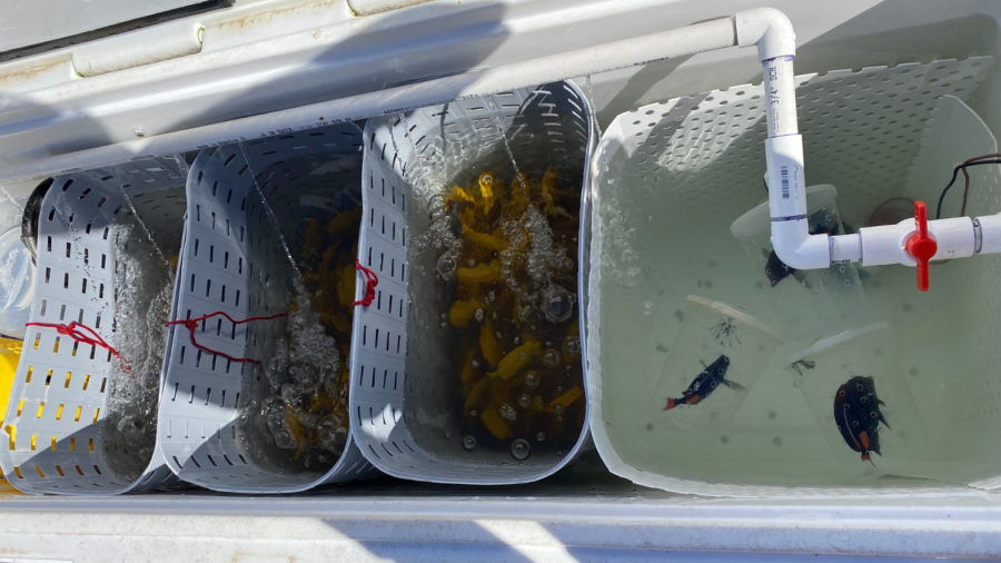 Kaʻū Man Accused Of Illegally Taking Hundreds Of Fish Off South Point