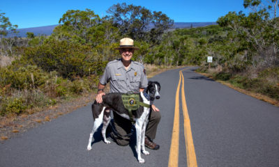 """Bark Ranger"" Program Unleashed At Hawaiʻi Volcanoes"
