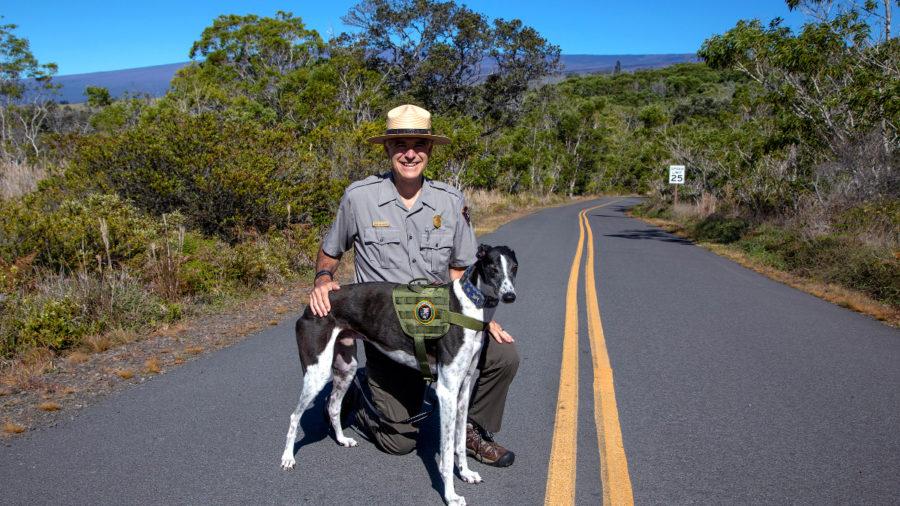 """Bark Ranger"" Program Unleashed At Hawaiʻi Volcanoes"