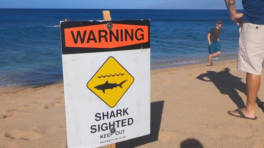 Shark Encounter Off Kukio, Swimmer Taken To Hospital