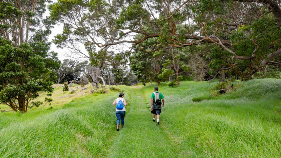 Kahuku Unit Trails Reopen in Hawaiʻi Volcanoes National Park