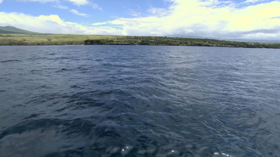Waialea Bay To Close For Coral Spawning