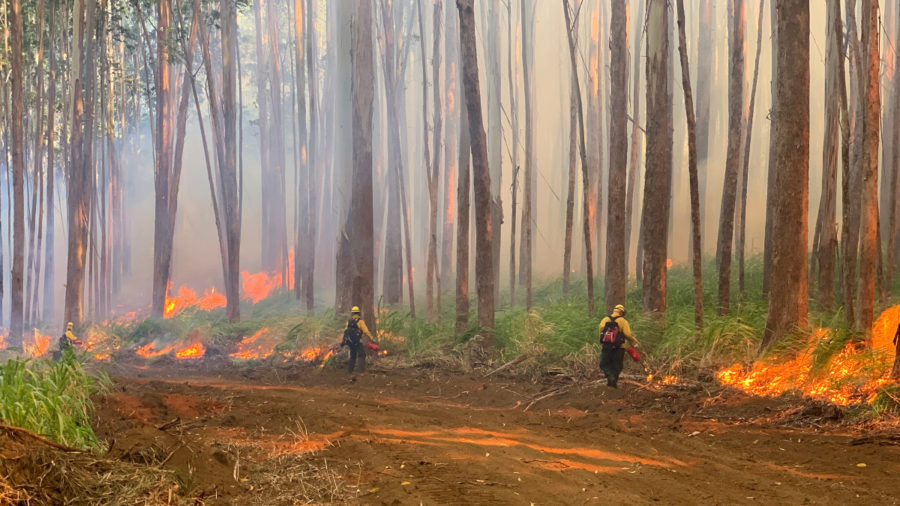 DLNR Says Paʻauilo Wildfire Could Be Start To Active Fire Season