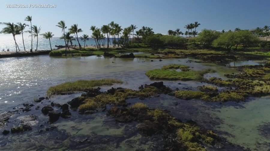 Visitor From Illinois Apparently Drowns At Waikoloa Beach