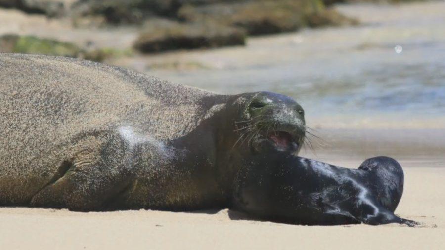VIDEO: Don't Harass Marine Wildlife, Hawaiʻi Officials Plead